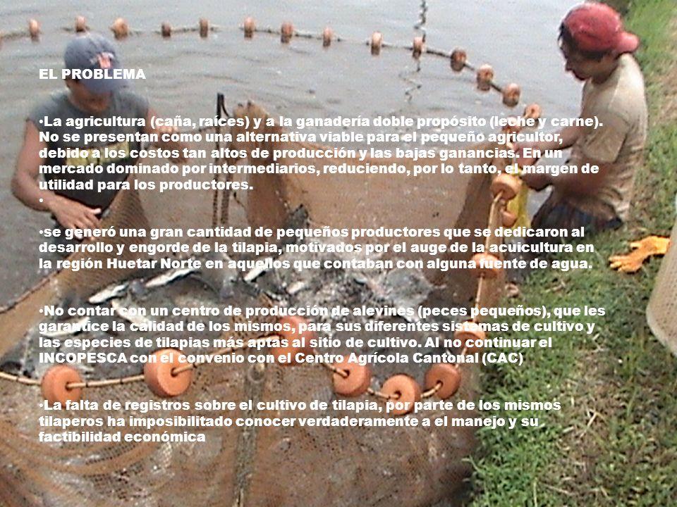 SU IMPORTANCIA La investigación sobre cultivos intensivos de tilapia en Costa Rica debería dirigirse más que todo al establecimiento de la mejor metodología de manejo para los diferentes sistemas de cultivo existentes, así como evaluar la factibilidad de esta metodología.