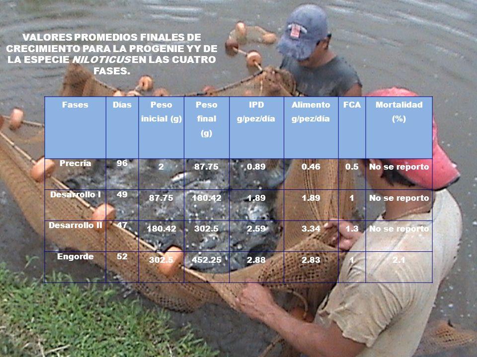 CONCLUSIONES La fuente de agua que abastece las instalaciones ubicadas en el Proyecto Ecotilapia presenta condiciones físico-químicas adecuadas para el cultivo intensivo de tilapia en densidades de 20 peces/m³.