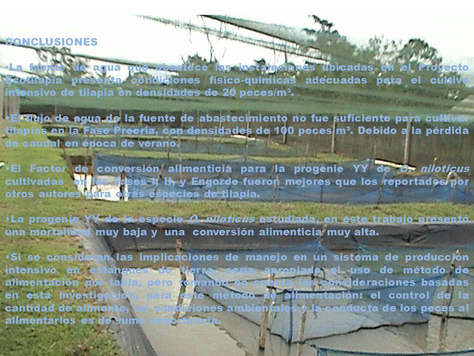 RECOMENDACIONES Realizar investigaciones relacionadas con la producción intensiva de progenie YY en lugares con fuentes de agua, con temperaturas más bajas utilizando otros sistemas de cultivo.