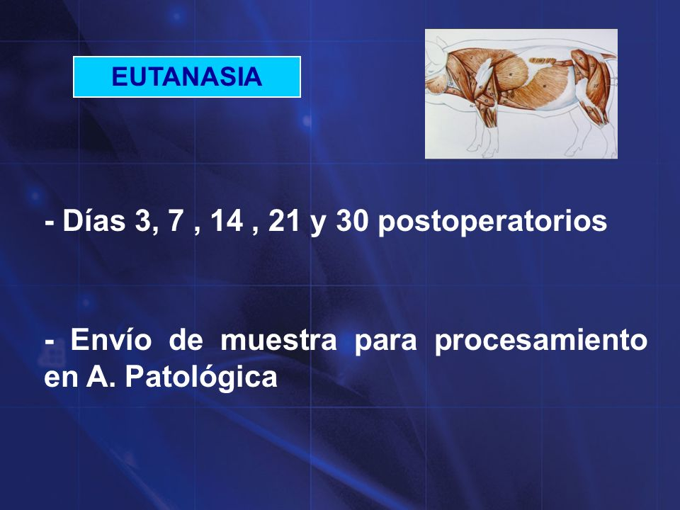 ESTUDIO A-P macroscópico 1 2 3