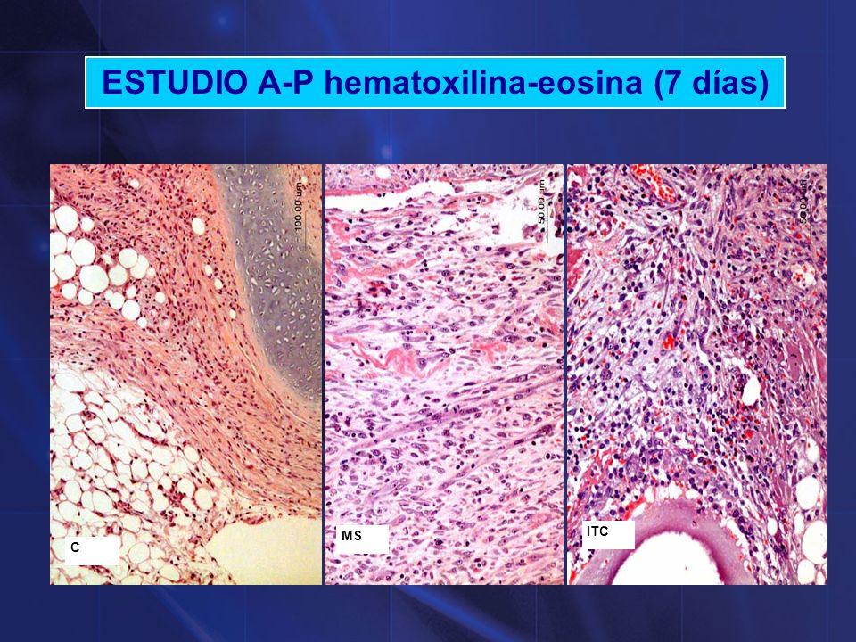 ESTUDIO A-P hematoxilina-eosina (14 días) CMSITC