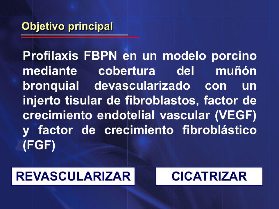 Objetivo real Determinar la capacidad de cicatrización/regeneración del injerto tisular con vistas a su aplicación en el campo de la Cirugía Torácica: - Defectos de pared torácica - Infección de heridas
