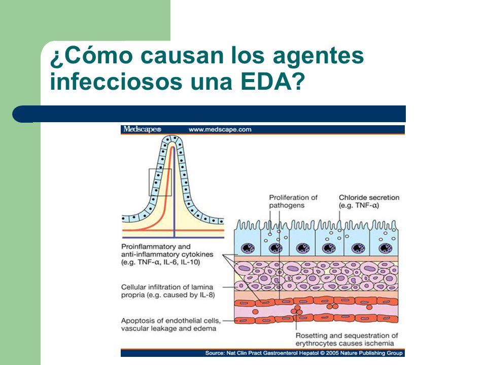 ¿Cuál es la evolución habitual de la EDA.