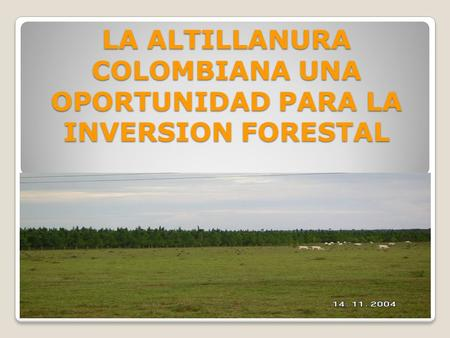 LA ALTILLANURA COLOMBIANA UNA OPORTUNIDAD PARA LA INVERSION FORESTAL