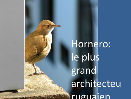 Hornero: le plus grand architecteu ruguaien.