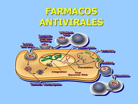 FARMACOS ANTIVIRALES. INTRODUCCION Los virus son parásitos intracelulares. Están constituidos por DNA o RNA de una sola o doble hebra envueltas por una.
