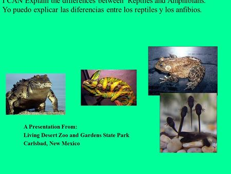 I CAN Explain the differences between Reptiles and Amphibians. Yo puedo explicar las diferencias entre los reptiles y los anfibios. A Presentation From: