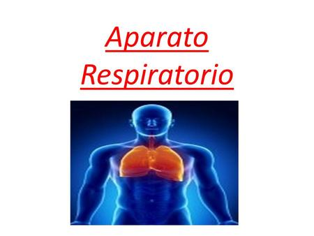 Aparato Respiratorio. In human beings and other mammals, the respiratory system consists of respiratory tracts, lungs and respiratory muscles that happen.