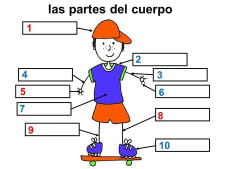 Las partes del cuerpo 1 2 4 3 5 6 7 Ask pupils to name the parts of the body. The words do not come up – the coloured numbers give the gender clue. 1 =