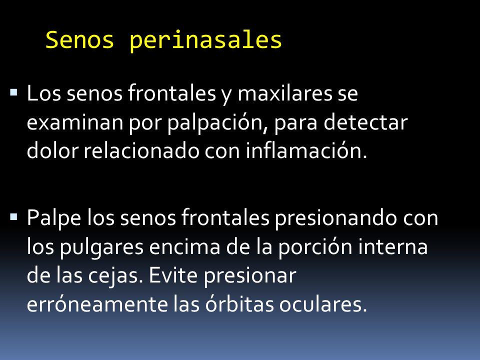 Senos perinasales Palpe los senos maxilares presionando con la punta de sus dedos pulgares sobre los huesos maxilares, situados por debajo de las órbitas y a los lados de la nariz.