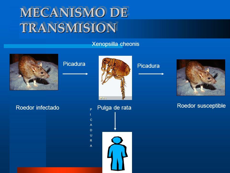 DIAGNOSTICO DIFERENCIAL Existen algunas enfermedades infecciosas que son transmitidas por roedores salvajes y que los síntomas presentados por una persona infectada son similares con los de la peste, pero pueden ser causada por otra enfermedad