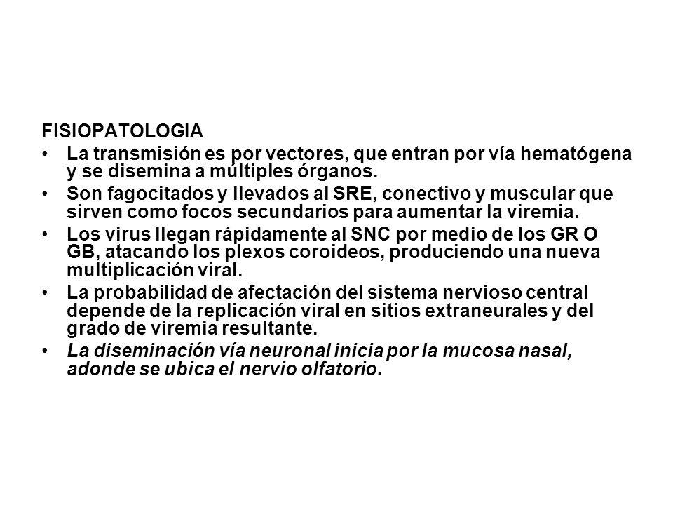 Ciclo silvestre o enzoótico: Las variantes ID, IE y los subtipos II, III, IV del virus de la EEV están invariablemente asociados con un ciclo selvático o enzoótico en el cual se presenta la transmisión roedor- mosquito.