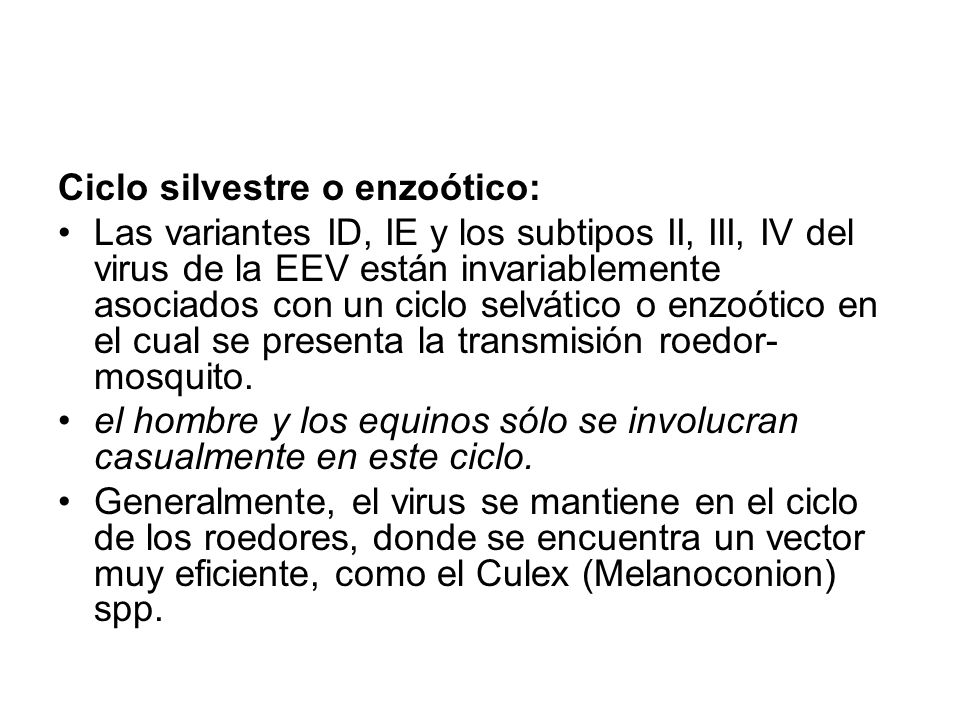 Ciclo epizoótico Comprende la infección de algún genero de mosquitos como vector invertebrado y a equinos (caballos y burros) como huéspedes vertebrados.