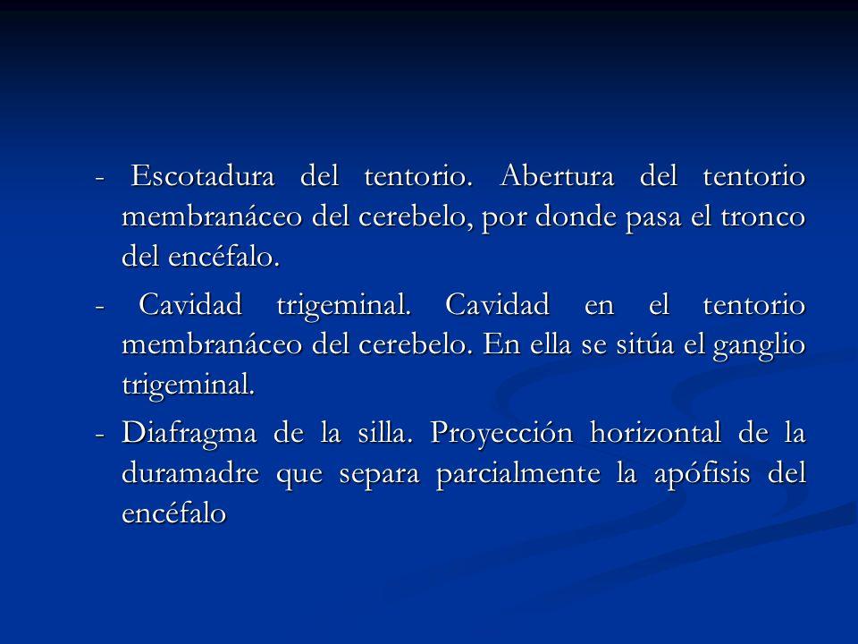 Aracnoides encefálica.Meninge te topografía y configuración similar a la aracnoides espinal.