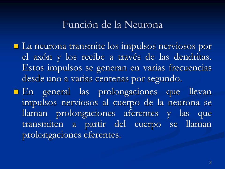 3 Tipos de Neuronas Desde el punto de vista funcional se pueden agrupar en tres tipos: Desde el punto de vista funcional se pueden agrupar en tres tipos: 1.- Neuronas Sensoriales; Comprenden desde los diversos tipos de receptores de estímulos hasta las neuronas que conforman el sistema nervioso central.
