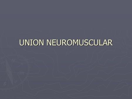 UNION NEUROMUSCULAR.