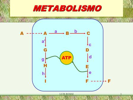 LUIS ROSSI1METABOLISMO ABC D F G IF ATP ab c d a' g A H h E e.