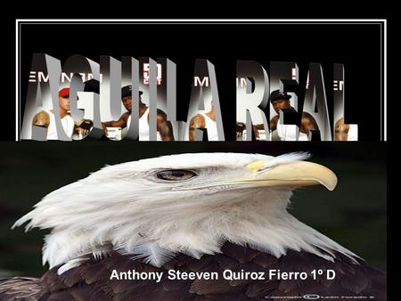 AGUILA REAL Anthony Steeven Quiroz Fierro 1º D.