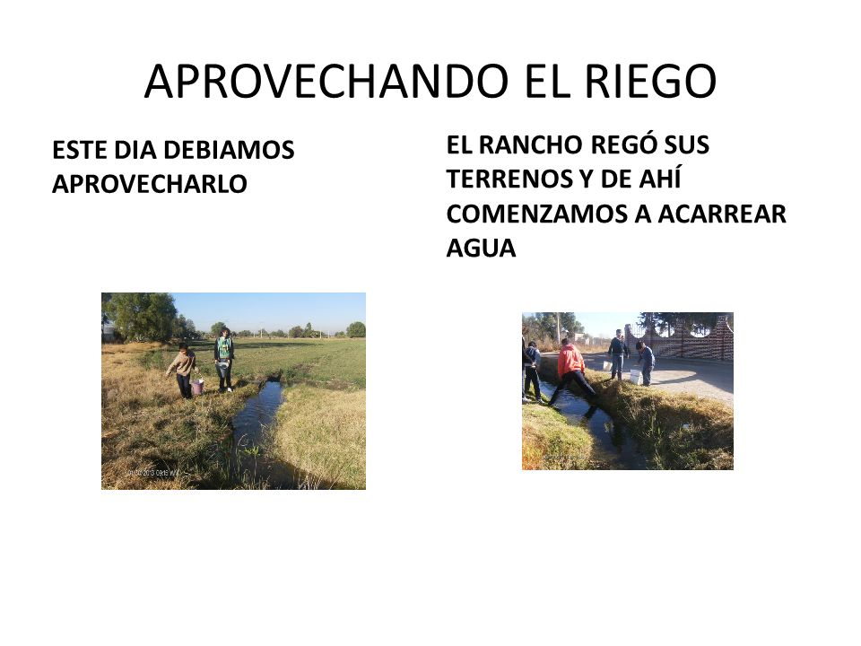 LA TOTALIDAD DE LAS PLANTAS FUERON DONADAS POR ALUMNOS, PADRES E INCLUSO PARTICULARES Limpiar la zona fue divertidoEste es un AGAVE