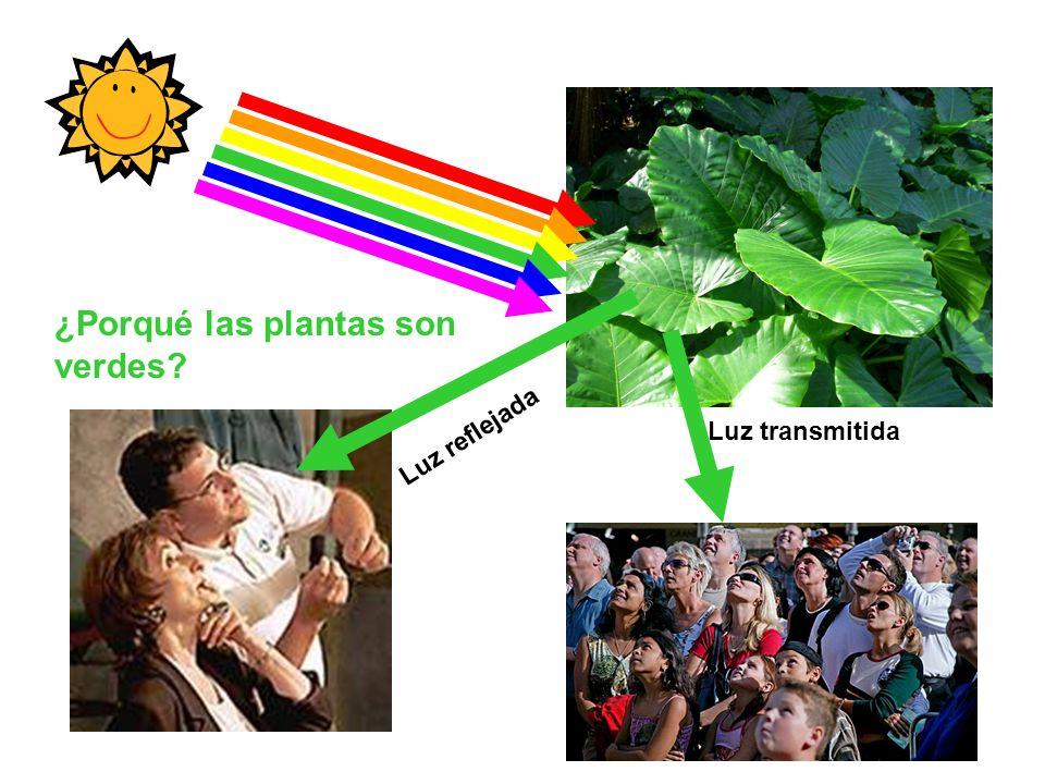 Los cloroplastos absorben energía de la luz y la convierten en energía química Luz Luz reflejada Luz absorbida Luz transmitida Cloroplasto EL COLOR QUE SE VE ES EL QUE NO SE ABSORBIÓ
