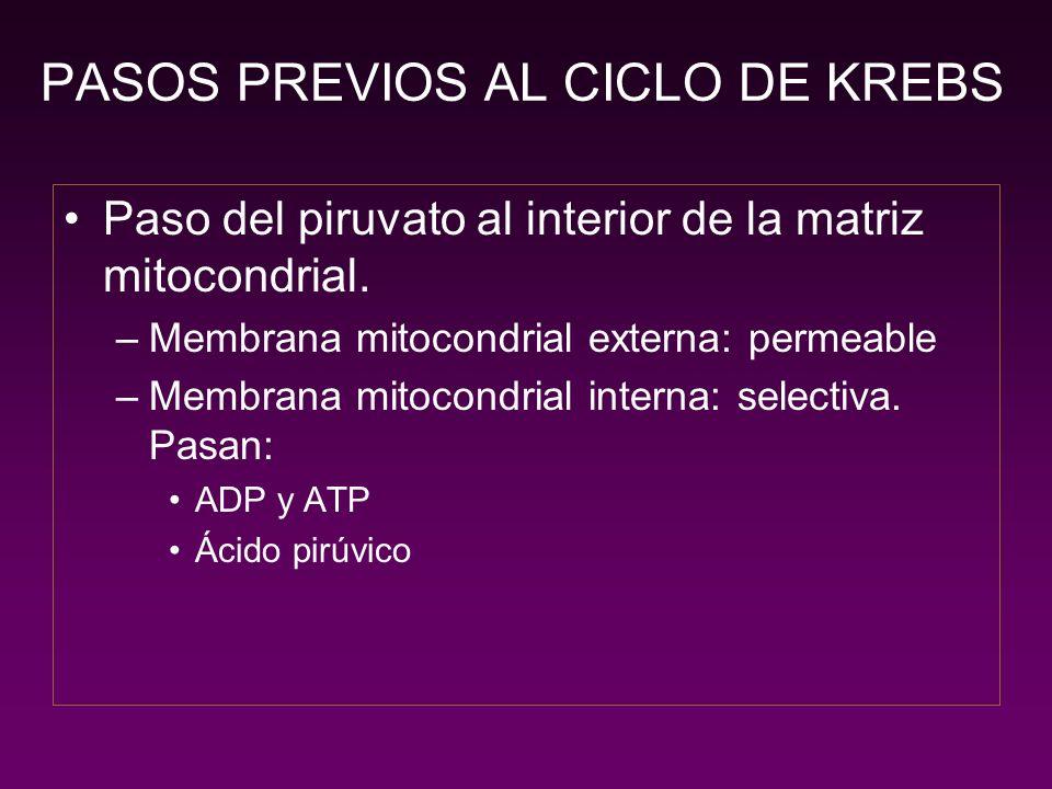 PASOS PREVIOS AL CICLO DE KREBS Piruvato deshidrogenasa.
