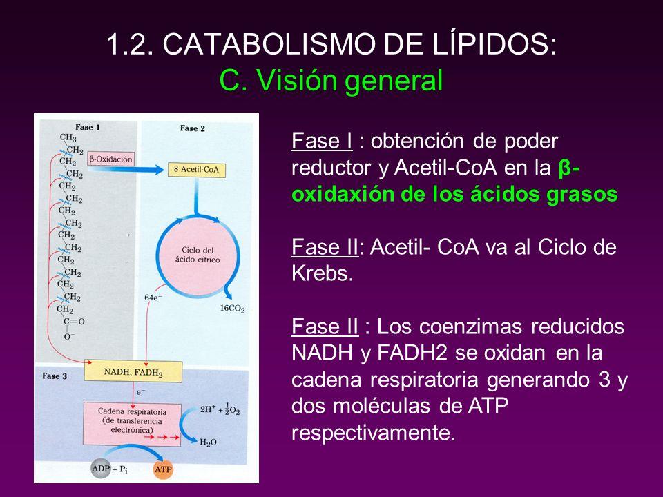 1.2.CATABOLISMO DE LÍPIDOS: D. Balance energético.