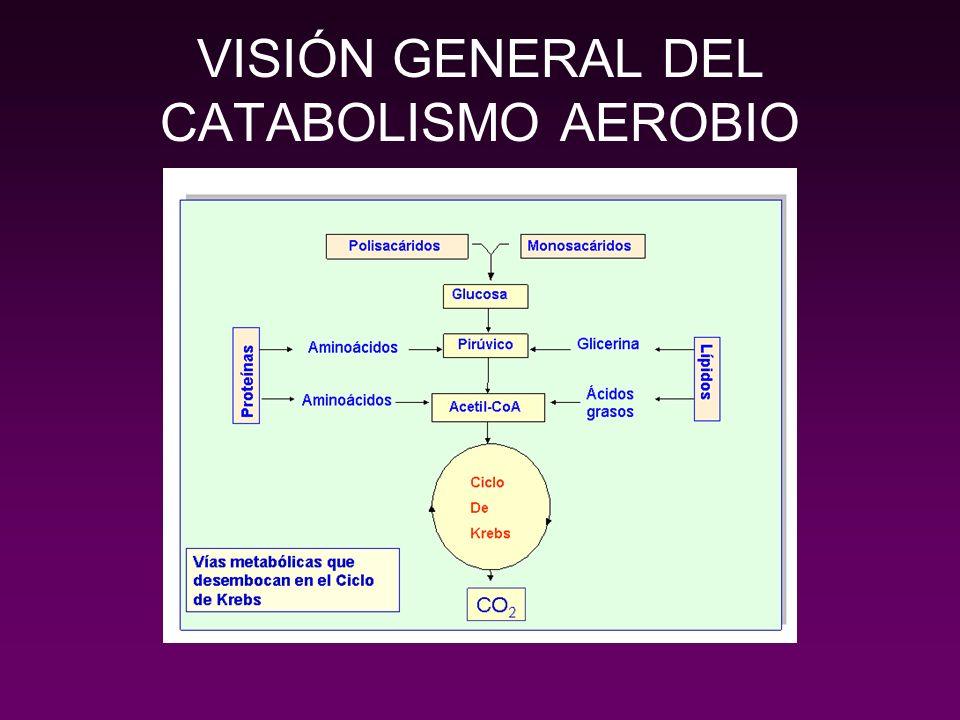 2. CATABOLISMO ANAEROBIO