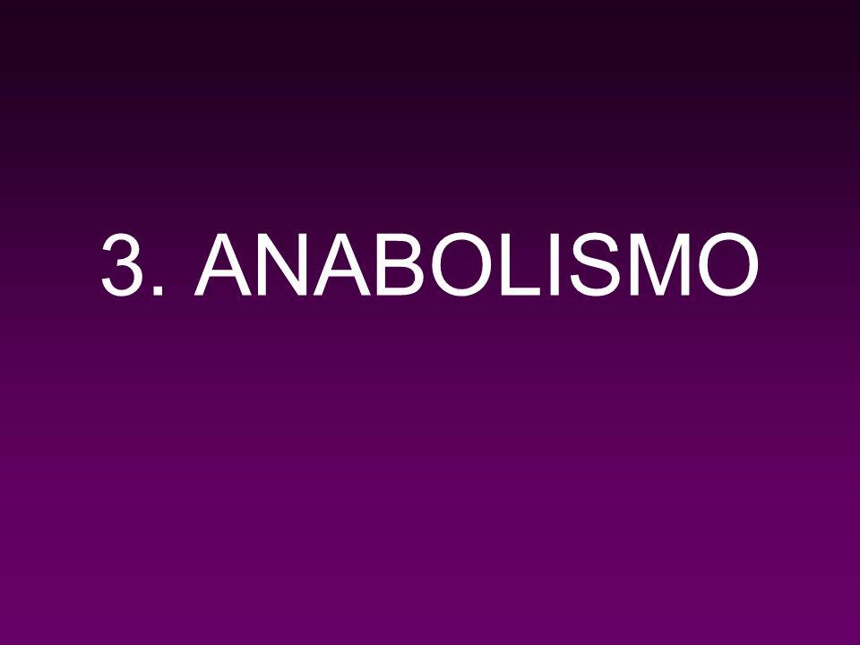 3.1.Los sustratos de la glicolisis y del Ciclo de Krebs pueden convertirse en aminoácidos.