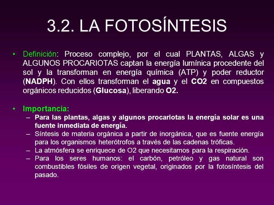 FASES DE LA FOTOSÍNTESIS 1.Fase luminosa: Utilizando luz visible como fuente de energía produce PODER REDUCTOR (NADPH), O2 y ATP.