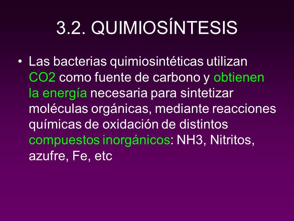 BACTERIAS QUIMIOSINTÉTICAS DEL NITRÓGENO REACCIONES DE OXIDACIÓN NH 3 a nitritos (Nitrosomonas) Nitritos a nitratos (Nitrobacter) 2 NH 4 + + 3 O 2 2 NO 2 - + 4H + + 2 H 2 O + energía 2 NO 2 - + O 2 2 NO 3 - + energía Puede ser absorbido por las plantas Nitrosomonas y Nitrobacter comparten el mismo habitat.