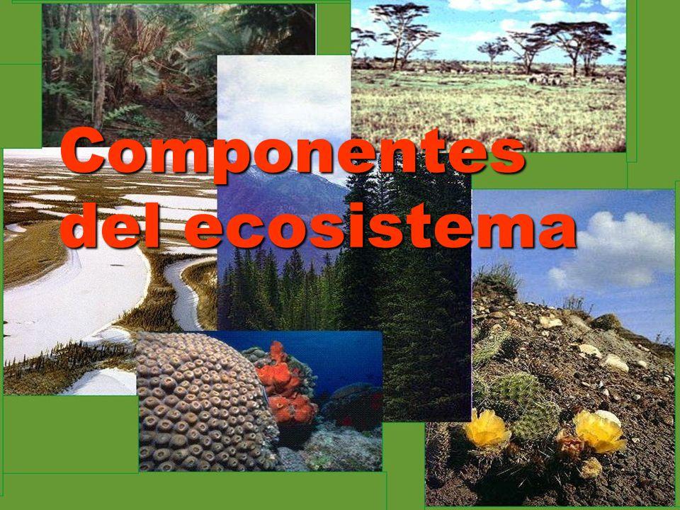 Ecosistema Ecosistema Los ecosistemas son sistemas complejos como el bosque, el río o el lago, formados por una trama de elementos físicos (el biotopo) y biológicos (la biocenosis o comunidad de organismos).