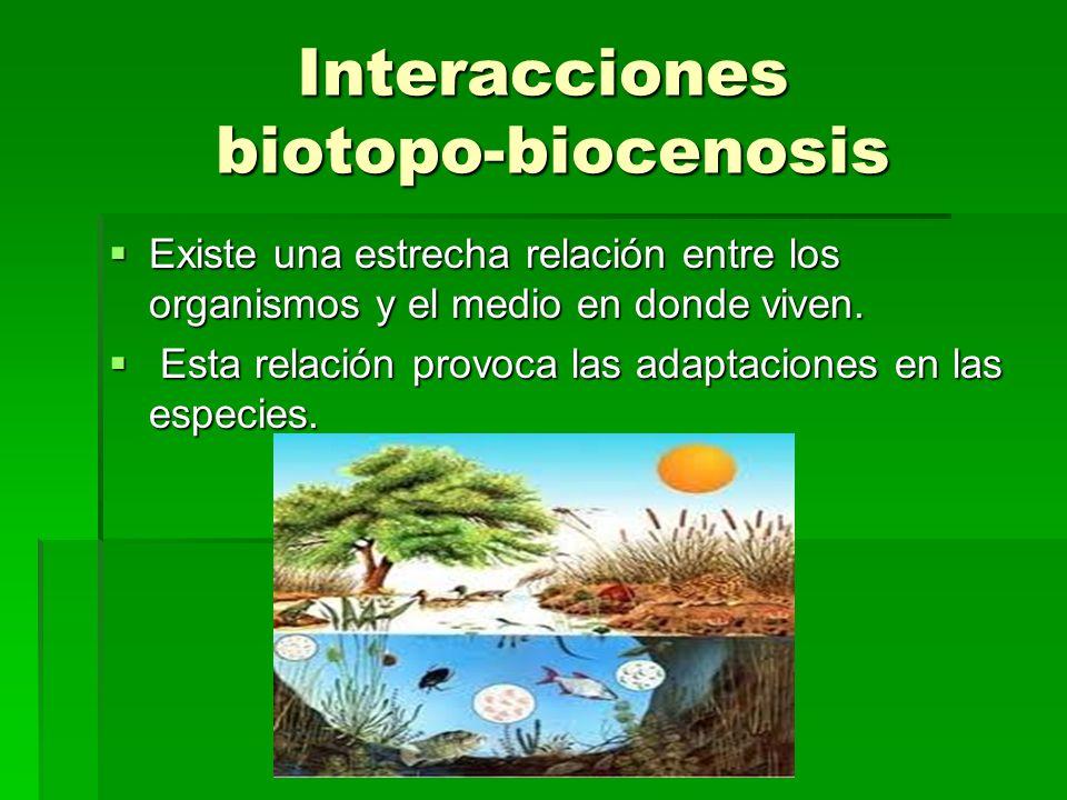 Interacciones en la biocenosis Entre las diferentes especies que se dan lugar en un ecosistema se producen numerosas interacciones que pueden ser Entre las diferentes especies que se dan lugar en un ecosistema se producen numerosas interacciones que pueden ser Relaciones intraespecíficas (agrupación familiar).