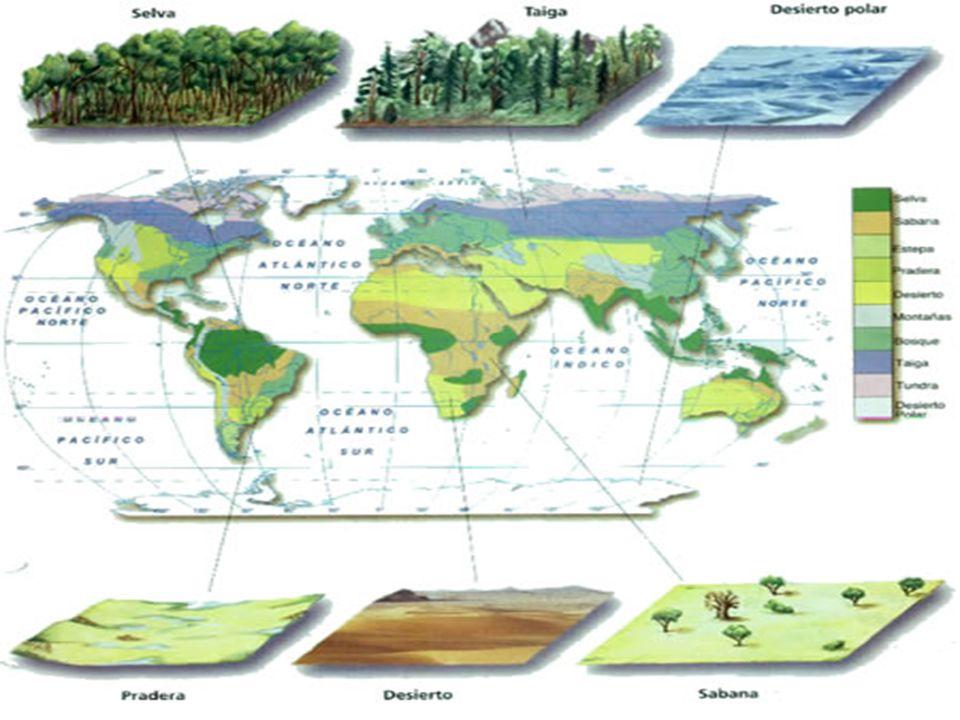 Ecosistemas Acuáticos Ecosistemas Acuáticos Se entiende por ecosistemas acuáticos a todos aquellos ecosistemas que tienen por biotopo algún cuerpo de agua, como pueden ser: mares, océanos, ríos, lagos, pantanos etc.