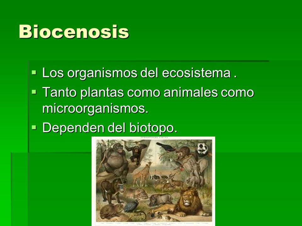 Factores Los factores abióticos y bióticos influyen en el ecosistema.