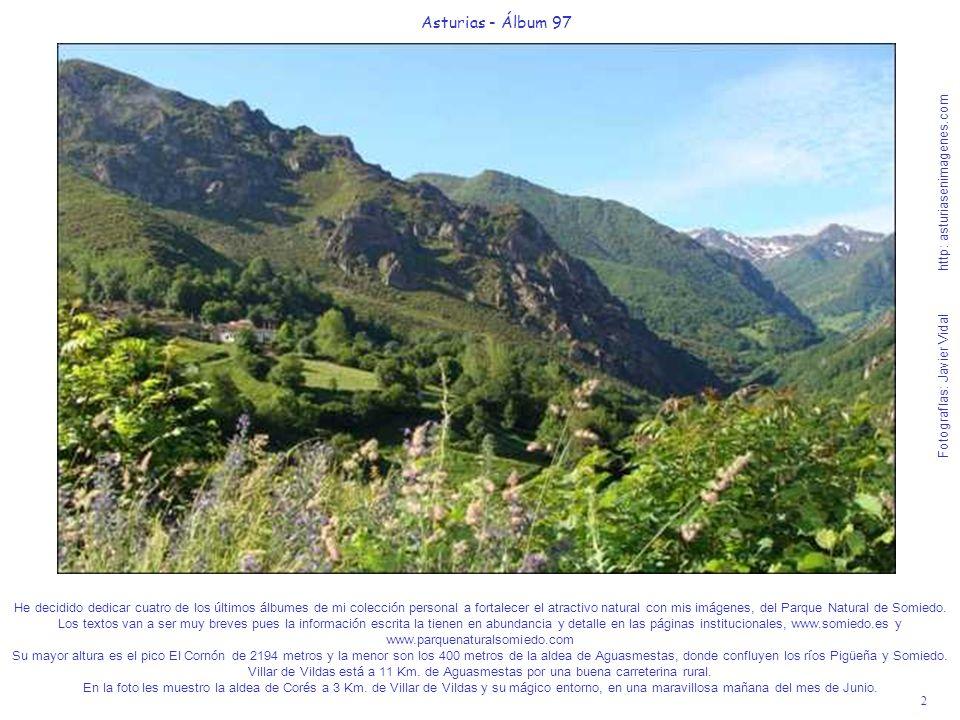 3 Asturias - Álbum 97 Fotografías: Javier Vidal http: asturiasenimagenes.com Les voy a aclarar algo al respecto del Oso Cantábrico, para que no se lleven decepciones posteriores.
