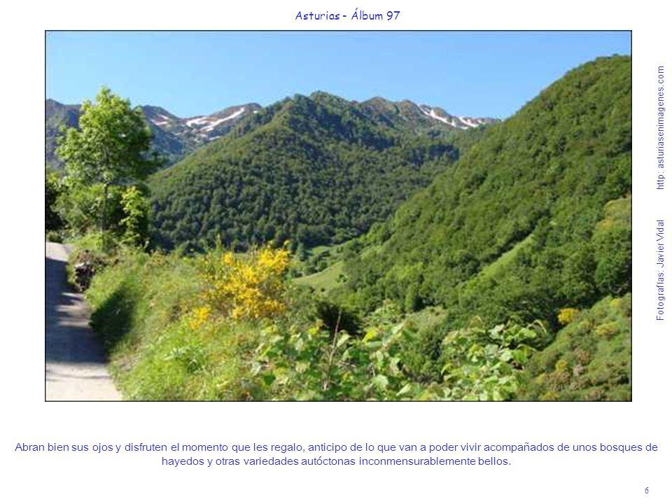 7 Asturias - Álbum 97 Fotografías: Javier Vidal http: asturiasenimagenes.com Recuerden que están en un Espacio Natural Protegido y no pueden abandonar los caminos y adentrarse en los bosques, pues está prohibido para defender su futuro.