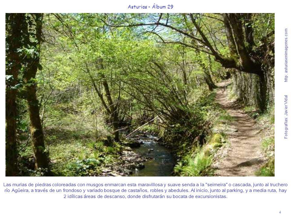 5 Asturias - Álbum 29 Fotografías: Javier Vidal http: asturiasenimagenes.com Primera visión a lo lejos de la cascada, rodeada de un variado bosque.