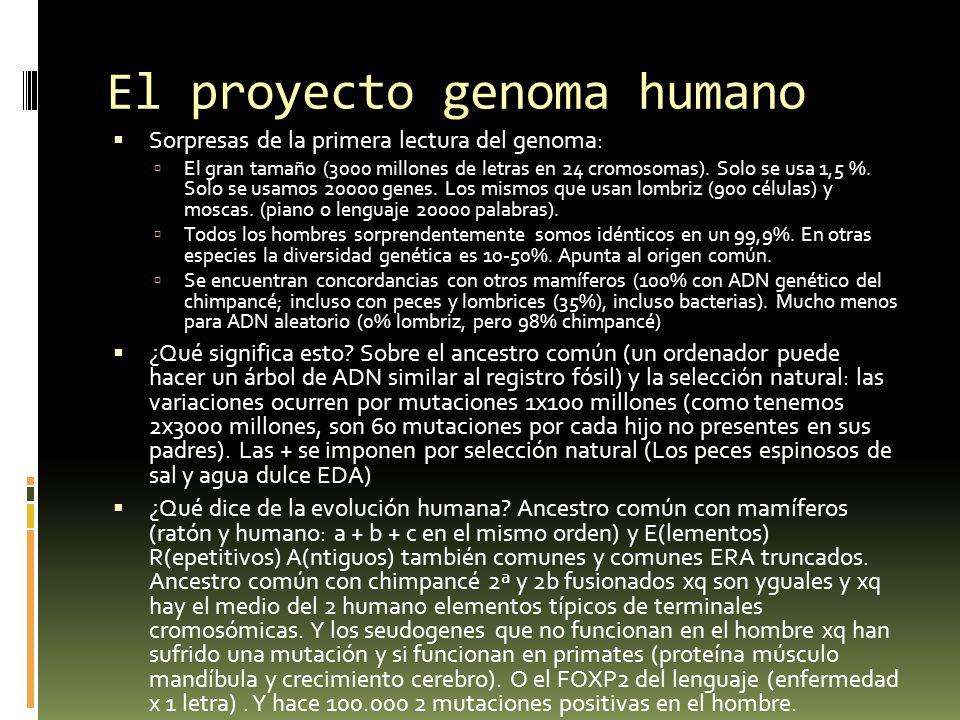 ADN y la hipótesis de Dios Liberar a Dios de la carga de actos especiales de creación o de adaptación no elimina como fuente de lo que hace especial al hombre.