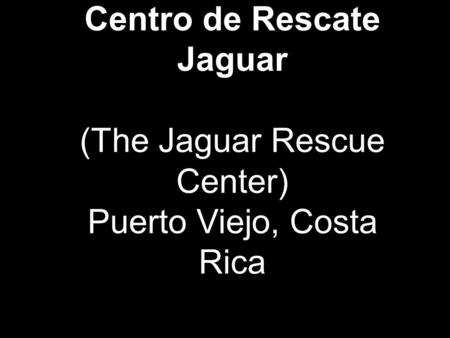 The Jaguar Animal Rescue Center in Playa Chiquita is anon-profit foundation to rehabilitate mistreated, injured and/or confiscated animals, which are then.