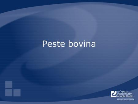 Peste bovina Rinderpest is a contagious disease of cattle, sheep, and goats that has also been called cattle plague.