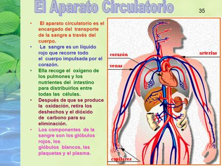 El Aparato Circulatorio