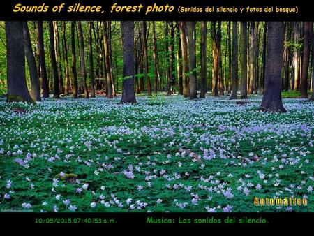 www.vitanoblepowerpoints.net 10/05/2015 07:42:33 a.m. Musica: Los sonidos del silencio. Sounds of silence, forest photo (Sonidos del silencio y fotos.