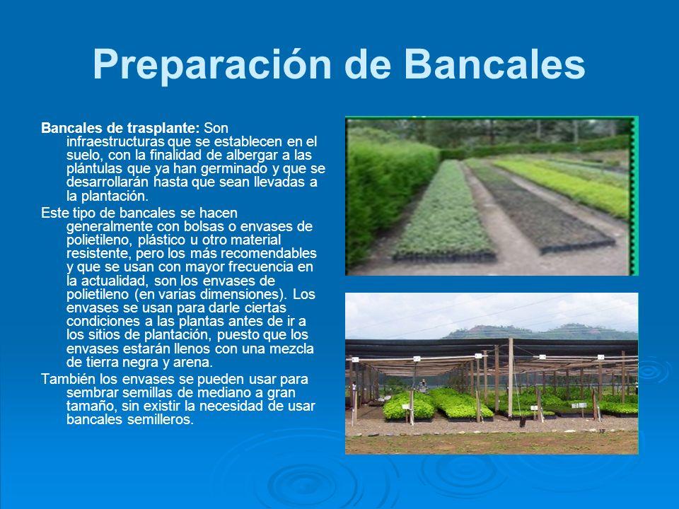 Bancales germinadores: Estos bancales se construyen con la única finalidad de sembrar semillas para su germinación.