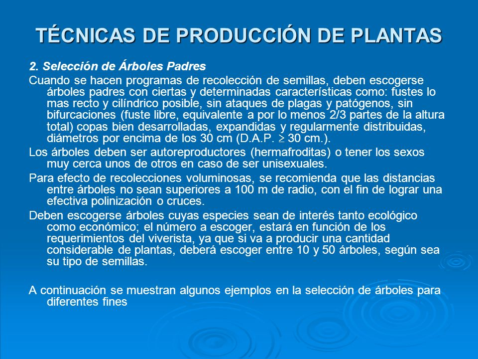 SELECCIÓN DE ÁRBOLES PADRES Buen Árbol Mal Árbol Para producción de madera