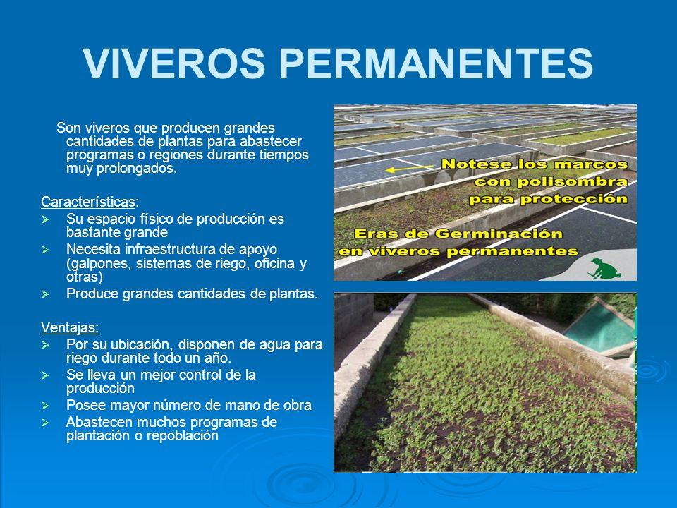 VIVEROS EN ENVASES Son viveros temporales o permanentes, cuya producción se hace específicamente en envases, para darles mejores condiciones a las plantas, antes de llevarlas a los sitios de plantación.