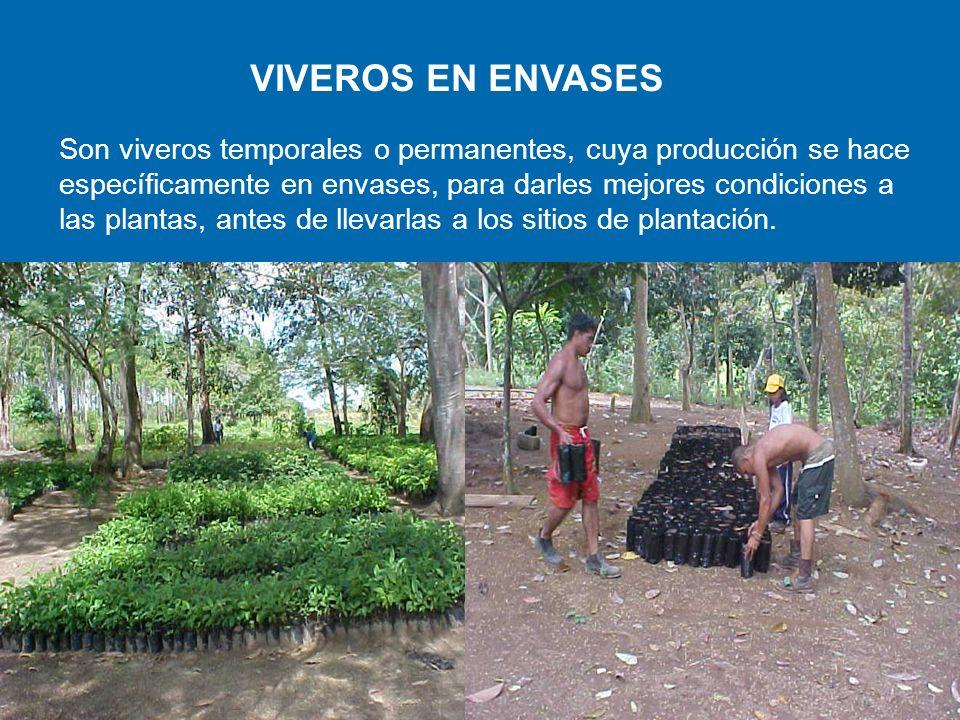 VIVEROS EN ENVASES Razones de los Viveros en Envases: Se deben hacer grandes cantidades de extracciones de tierra para llenar los envases.