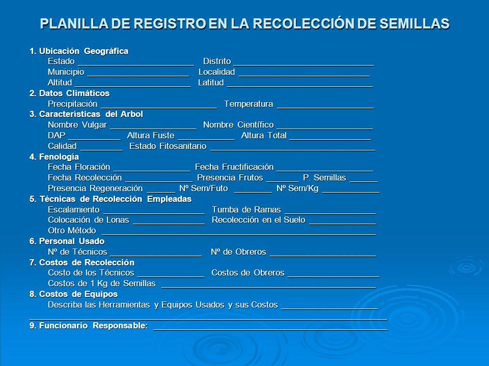 CALENDARIO DE RECOLECCIÓN DE SEMILLAS Especie/AñoEneFebMarAbrMayJunJulAgoSepOctNovDic Aceite Algarrobo Apamate Araguaney Caoba Caro Caro Cartán Cedro A.