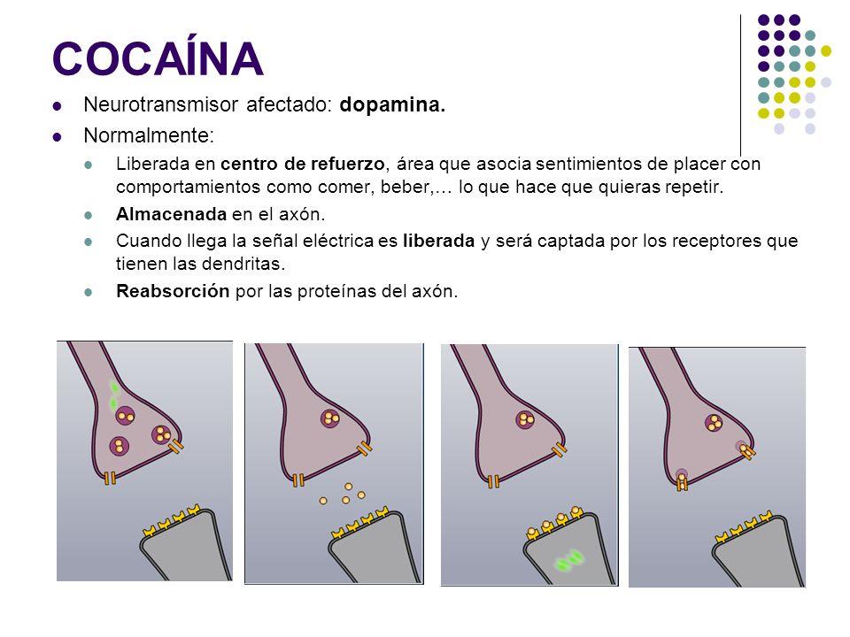 COCAÍNA (II) Con cocaína: Las moléculas de ésta se adhieren a las proteínas de reabsorción, bloqueo.