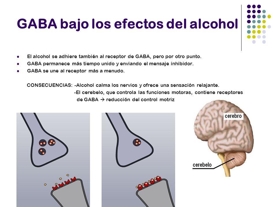 Tolerancia al alcohol y el GABA Tolerancia: necesidad de más alcohol para conseguir los mismos efectos Estructura de receptores GABA cambia menor sensibilidad al alcohol Síntomas de abstinencia y el GABA Cambia estructura receptores GABA GABA se adhiere muy brevemente ( en ausencia de alcohol)