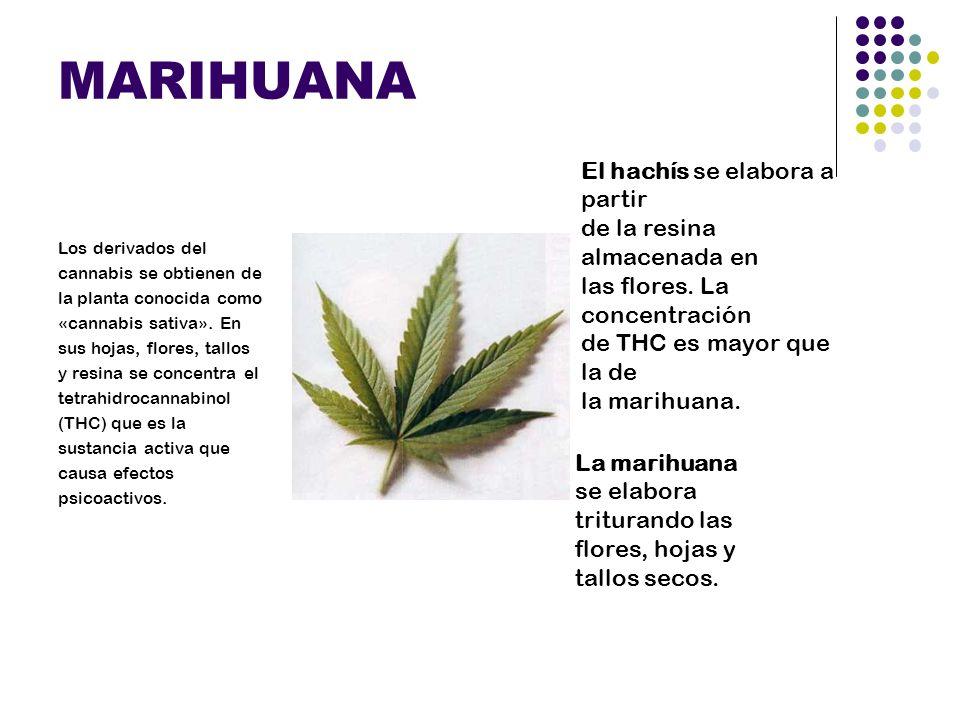 THC La marihuana es una droga depresora del Sistema Nervioso Central, tiene decenas de elementos psicoactivos, el más potente el THC(delta- 9 tetrahidrocannabinol ), que tiene su propio receptor en el cerebro.